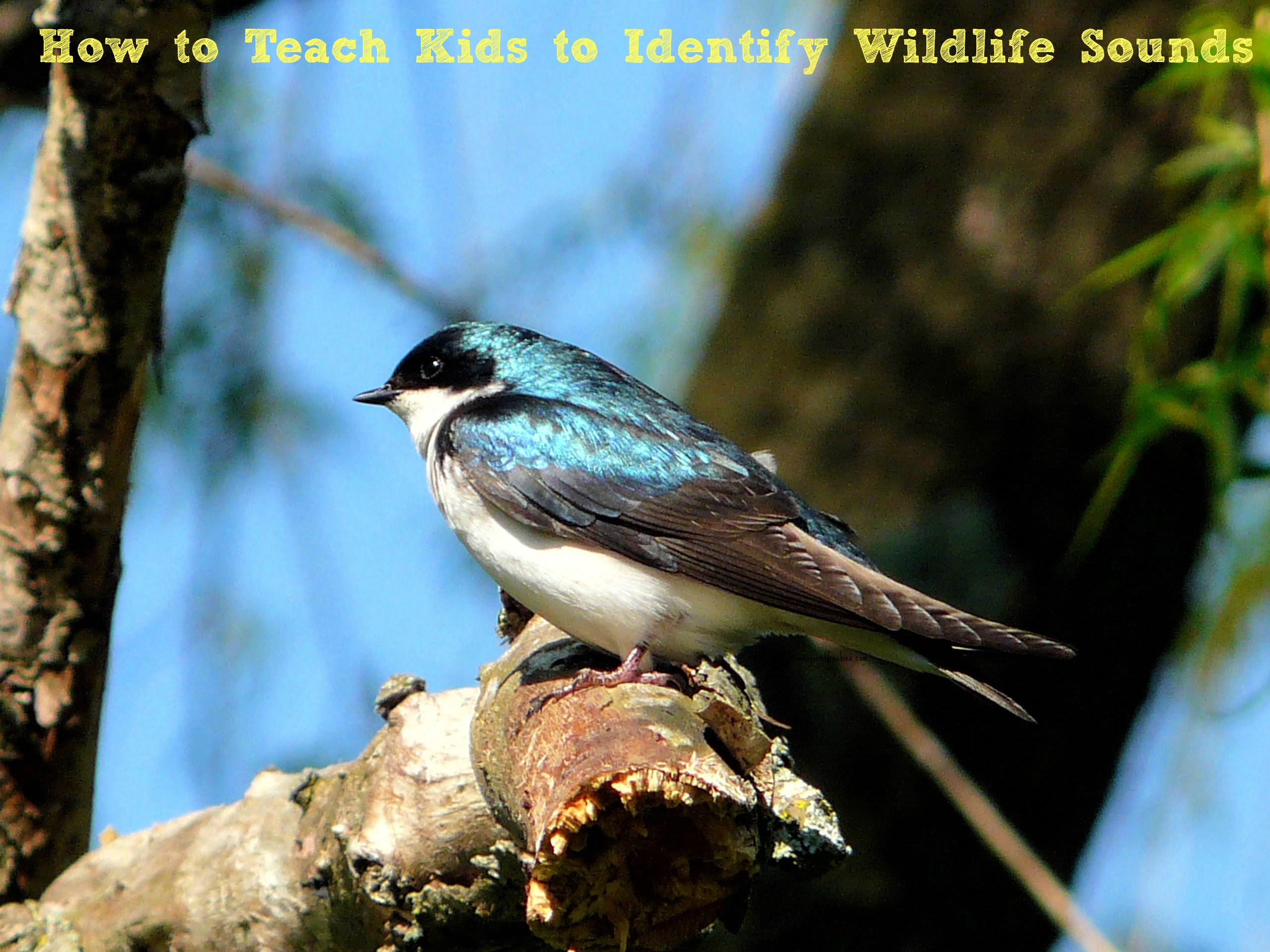 How to Teach Kids to Identify Wildlife Sounds