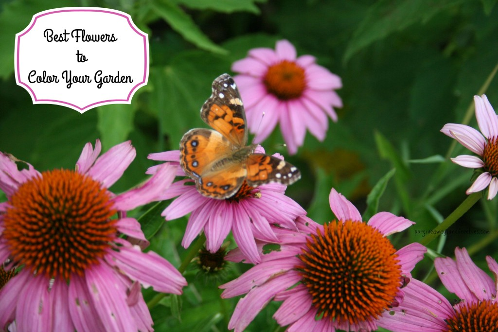 Best Flowers to Color Your Garden