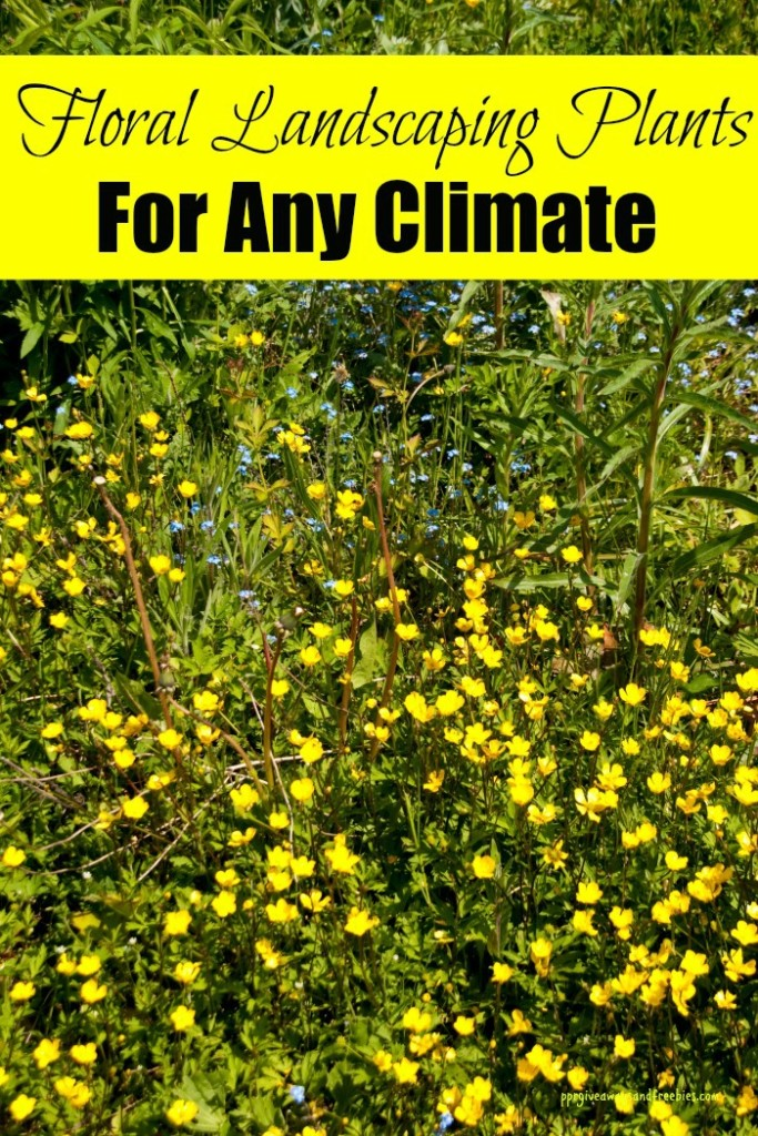 5 Floral Landscaping Plants  for Any Climate