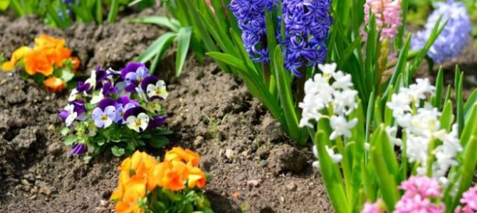 7 Perennial Garden Flowers You Will Love
