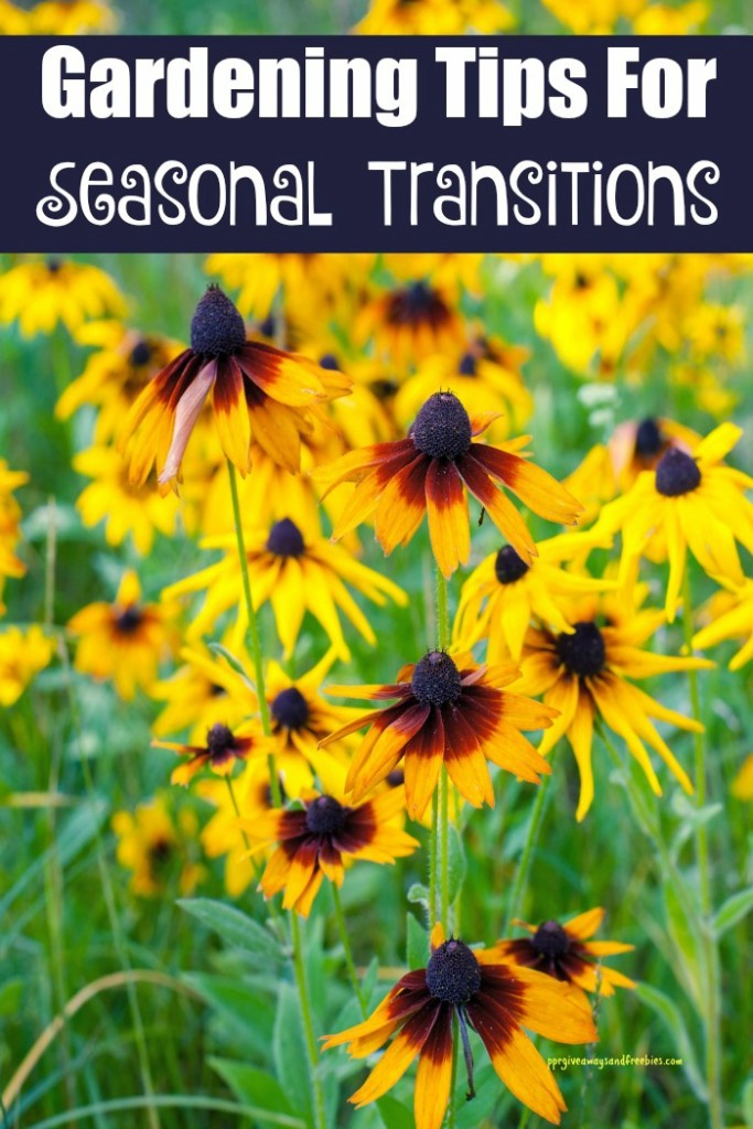 Gardening Tips For Seasonal Transitions