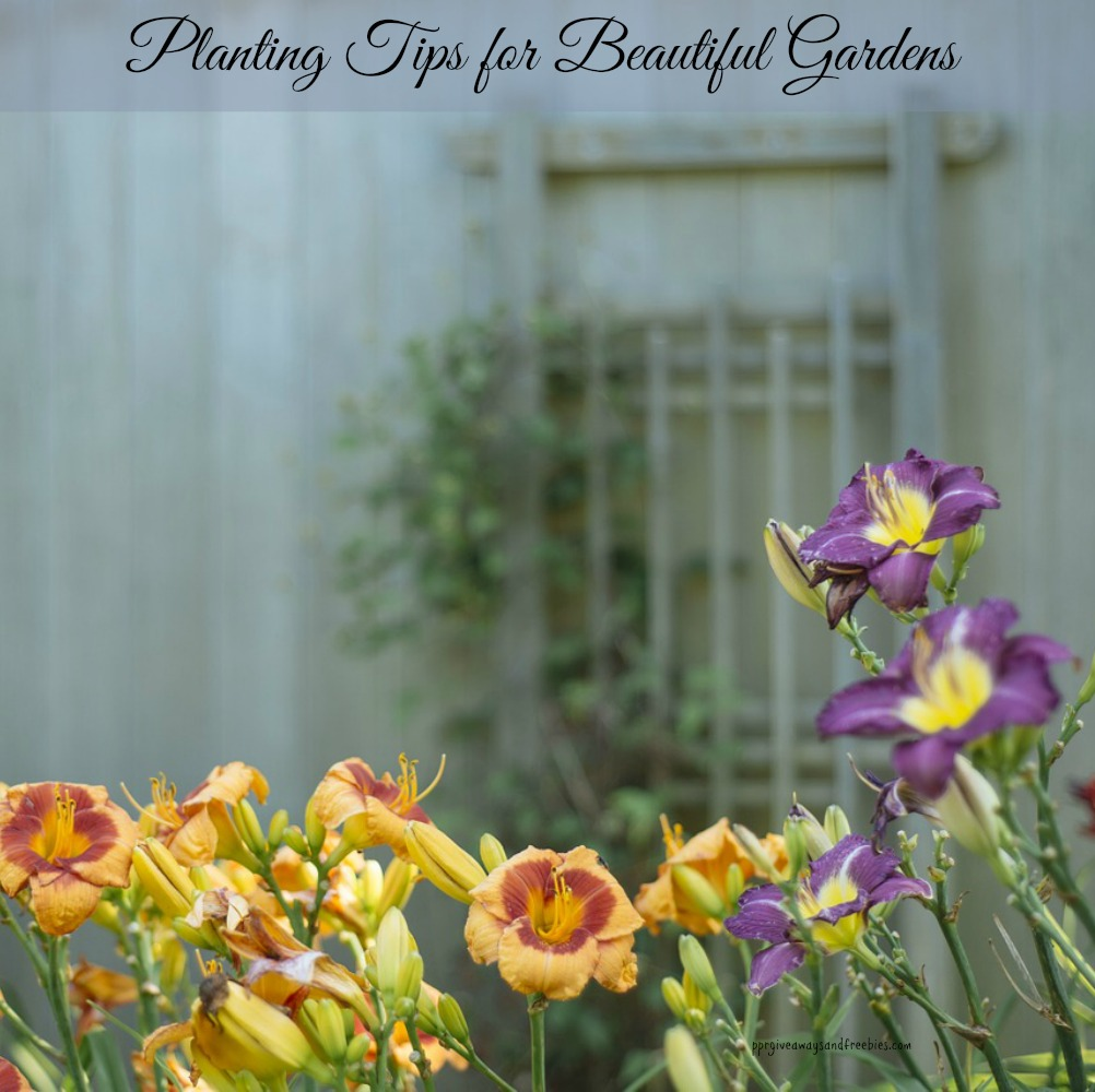 Planting Tips for Beautiful Gardens
